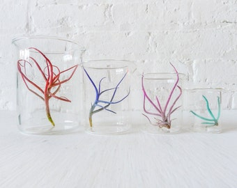 Color Air Plant Beaker Garden - The Chemical Color Garden Creepz Collection- Spring Gift
