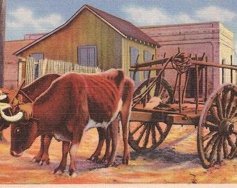 Mexico Postcard Ox Cart - Vintage Linen Postcard - Southwest Decor