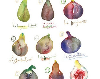 Kitchen art, Watercolor fig painting, Fruit poster, 8X10 print, Kitchen decor, Purple wall art, Watercolor print, Kitchen print, Food art