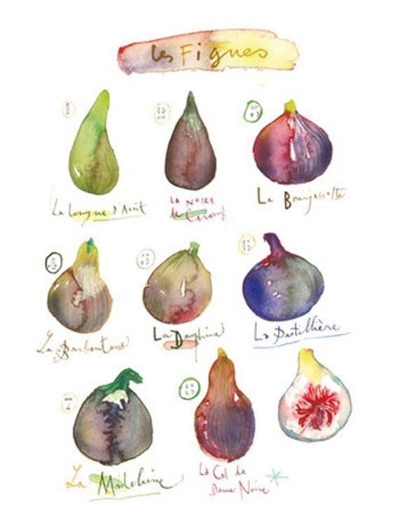 Kitchen art, Watercolor fig painting, Fruit poster, 8X10 print, Kitchen decor, Purple wall art, Watercolor print, Kitchen print, Food art