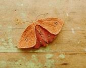 Large fabric moth, recycled textile art, burnt orange
