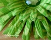 Large Green Zebra Print Gerbera Daisy Hair Clip