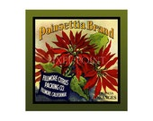 Small Journal - Poinsettia Brand Oranges  - Fruit Crate Art Print Cover