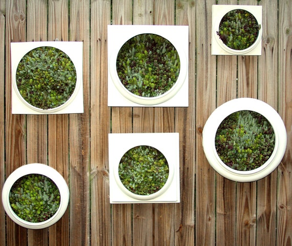 Living Wall Medium Planter - Comes preplanted & ready to hang- Great gfit idea