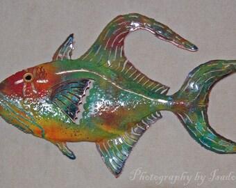 Hula Queen Trigger Fish