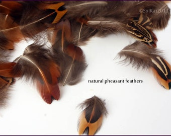 Pheasant Feathers Wholesale Craft Feathers Cheap but Excellent Quality Small Natural Feathers Crafting Earring Tippet Feathers, 30 Pieces