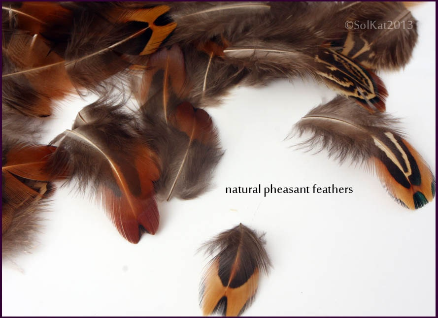 pheasant feathers wholesale craft feathers cheap but excellent