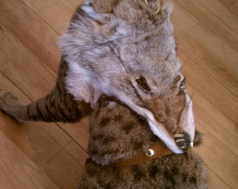 Coyote Face Cat or Dog Harness