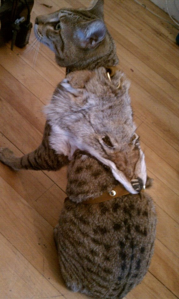 coyote chat Formal coyote fur sporran made from real coyote and high quality leather, lowest  price - ut kilts.