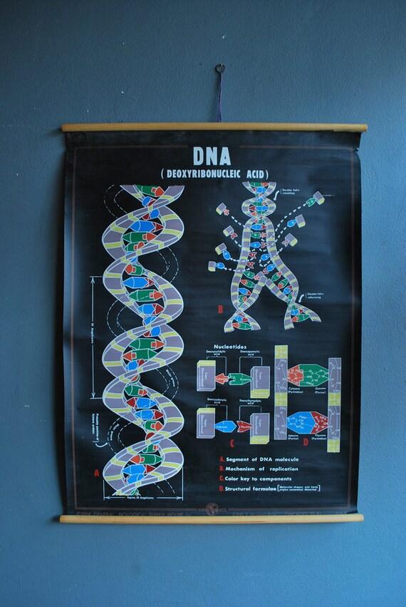 1960's DNA Chart