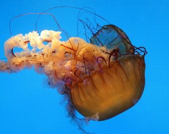 Orange and Turquoise Jellyfish Fine Art Photo