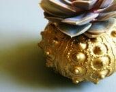 Gold Sea Urchin