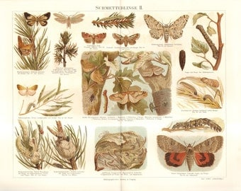 1890 Butterflies, Moths and their Caterpillars, Boarded White, Peppered Moth, Winter Moth Original Antique Chromolithograph