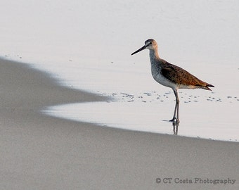 Sandpiper Shorebird Nature Photography Print gray, brown, North Carolina coastal art, 8x10 inch