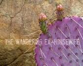 8x10/8x12 Photograph - 'Succulence IV' - Ojai, California