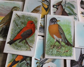 5 Vintage Collectible Bird Cards for Collage