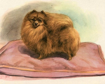 Pomeranian Dog Vintage Illustration Edwin Megargee 1940s Dog Print Art