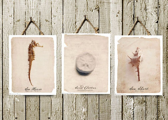 Beach Cottage Decor - Wall Art Set of 3 - Shabby Chic Beach Decor Natural History Antique Art Print Vintage Look - 8x10 Fine Art Photographs