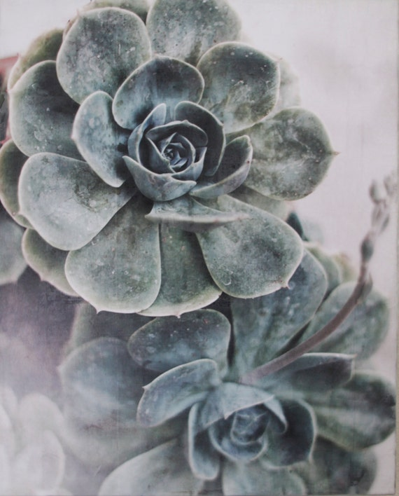 Original Encaustic Photography - Succulents I