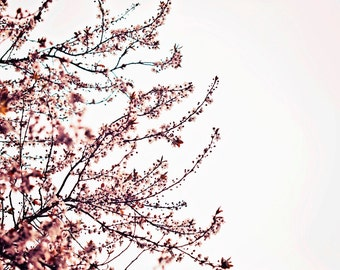 Cherry blossoms photo, cherry blossoms print, cherry blossoms canvas, pink and white art, oversized art