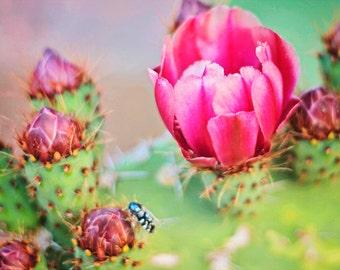 Blooming cactus print – flower photo, pink and green, macro bee, desert photo, Arizona photo