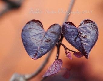 Natures Hearts Fine Art Print