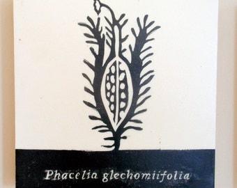 Phacelia glechomiifolia, Pennyroyal, Scorpionweed, Relief Print on Wood Panel, encaustic, botanical, hand pulled print, original art