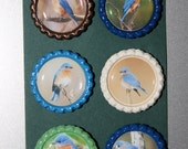 Eastern Bluebird Bottlecap Magnets (set of six)