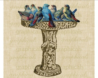 Blue birds at bird bath instant graphic digital download for iron on fabric transfer decoupage paper burlap pillows tote bags No. 523