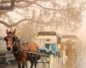 Carriage Ride Through New Orleans- Foggy Day- Matted Photos- Travel- Blue and Red