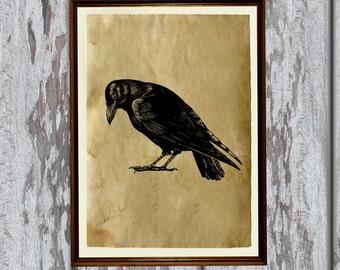 Crow art print Old paper Antiqued decoration vintage looking AK273