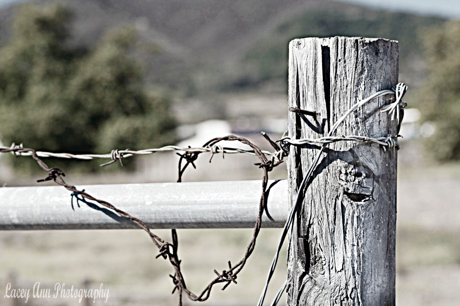 Old barbed wire fence country print black and white farm