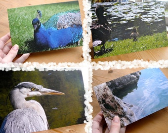 7 Recycled Blank Bird Photo Cards of Vancouver Island: Support Lyme Disease Foundation, fauna, animals, feathers, bright, ocean, bold, lake