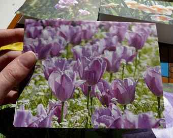 Photo Note Cards, Recycled, Blank, Blooms, of Vancouver Island, floral, landscape, beauty, earth-friendly, Support Lyme Disease Foundation