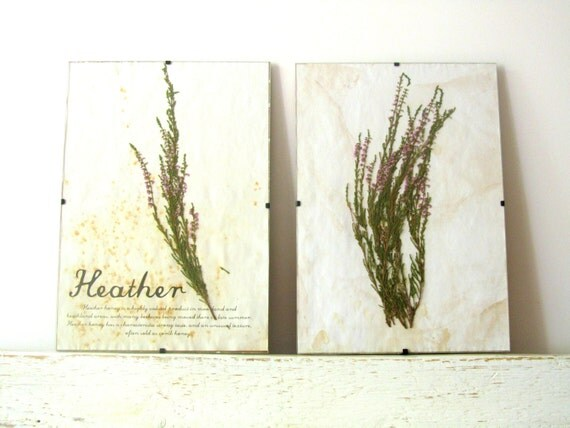 Pressed Herbs- Heather in Frame (2)