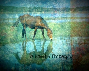 Horse photograph, wild horse, reflection water, texture photography, blue, teal, wild horse drinking, abstract, nomadah photography