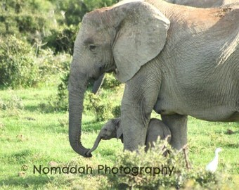 Mom and baby elephant photograph, nursery room art, new mom photography, baby elephant, animal photography, african animals, babies, kissing