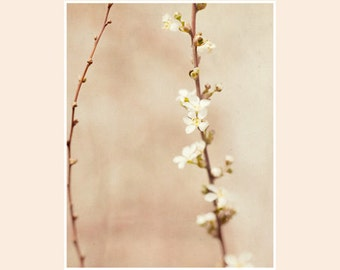 Asian Inspired Photograph, fine art photograph, spring flower photo, vintage inspired wall decor, dreamy airy art, guestroom wall decor