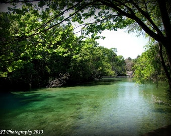 Homosassa Springs - 8X10 Color Photograph