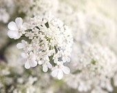 Queen Anne's Lace Macro Flower Print, Fine Art Photography, White Woodland Wildflower, Flower, Floral Print, Petals, Home Decor