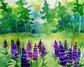 "Lupine fields in Vermont 8.5"" x 11"" Archival Digital Print"