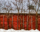 The Barn Trees -  Nature photography, landscape photography, winter, fine art print, trees, new england, New Hampshire, red barn, old barn