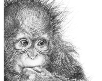 5 Greetings Cards, Baby Orangutan Drawing, Orangutan gift, animal greetings card, orangutan baby, cute greetings cards, wildlife art