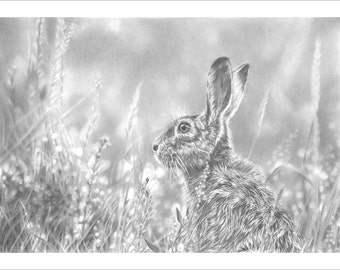 Brown Hare, British Wildlife Art, Limited Edition Print. Drawing of a Hare, sketch of a Hare, Hare art, Art print of a Hare, Wildlife art.