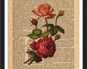 Vintage Flower Art-LOW COST-Downloadable Fine Art  Print-Will look Beautiful On Any Wall At Home Or The Office