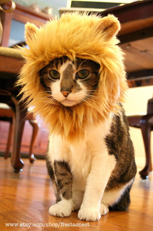 Как сделать себе львиную гриву