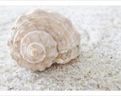 Seashell Photo 5x7 Signed Print Sand Beach Ocean Wall Art