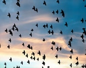 Birds Flying Sky Sunset Clouds -Freedom Nature Photograph - Pink & Blue Pastel -Home Decor Fine Art Print -Wall Art