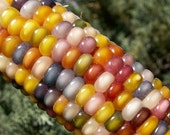 Authentic Glass Gem Corn, gorgeous, 25 seeds, rare heirloom, original strain, nonGMO, ornamental flint corn, legendary beauty, Gem Corn Seed