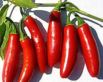 Serrano chili pepper, 50 bulk seeds, super hot, great for salsa, pickled, mex or thai cooking, small bushy plants, heirloom seeds